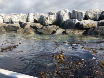 """""""Kelp Beds"""""""
