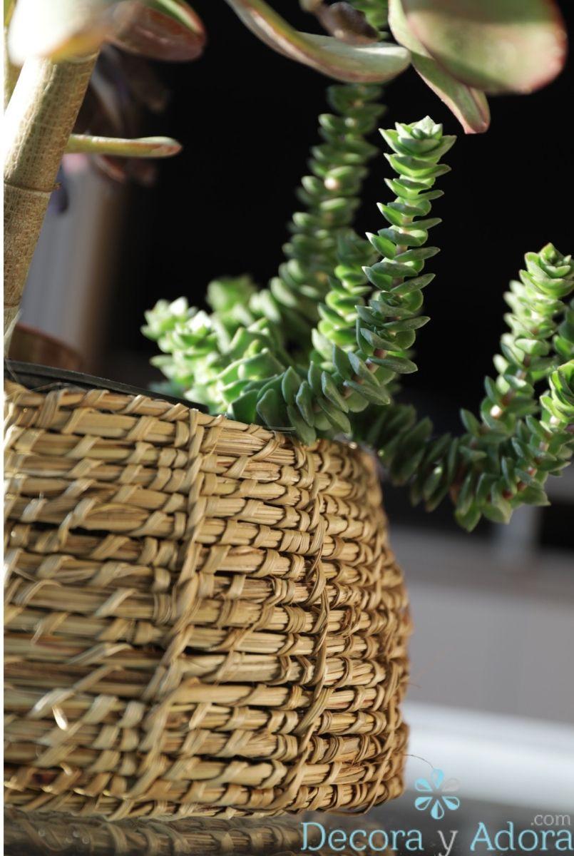 cactus en canasto , sala de estar