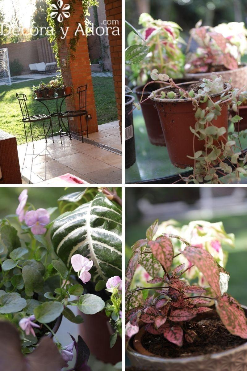 plantas en mi quincho