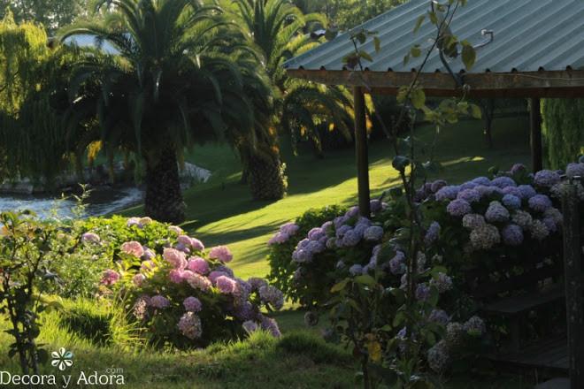 hermoso jardín con hortensias