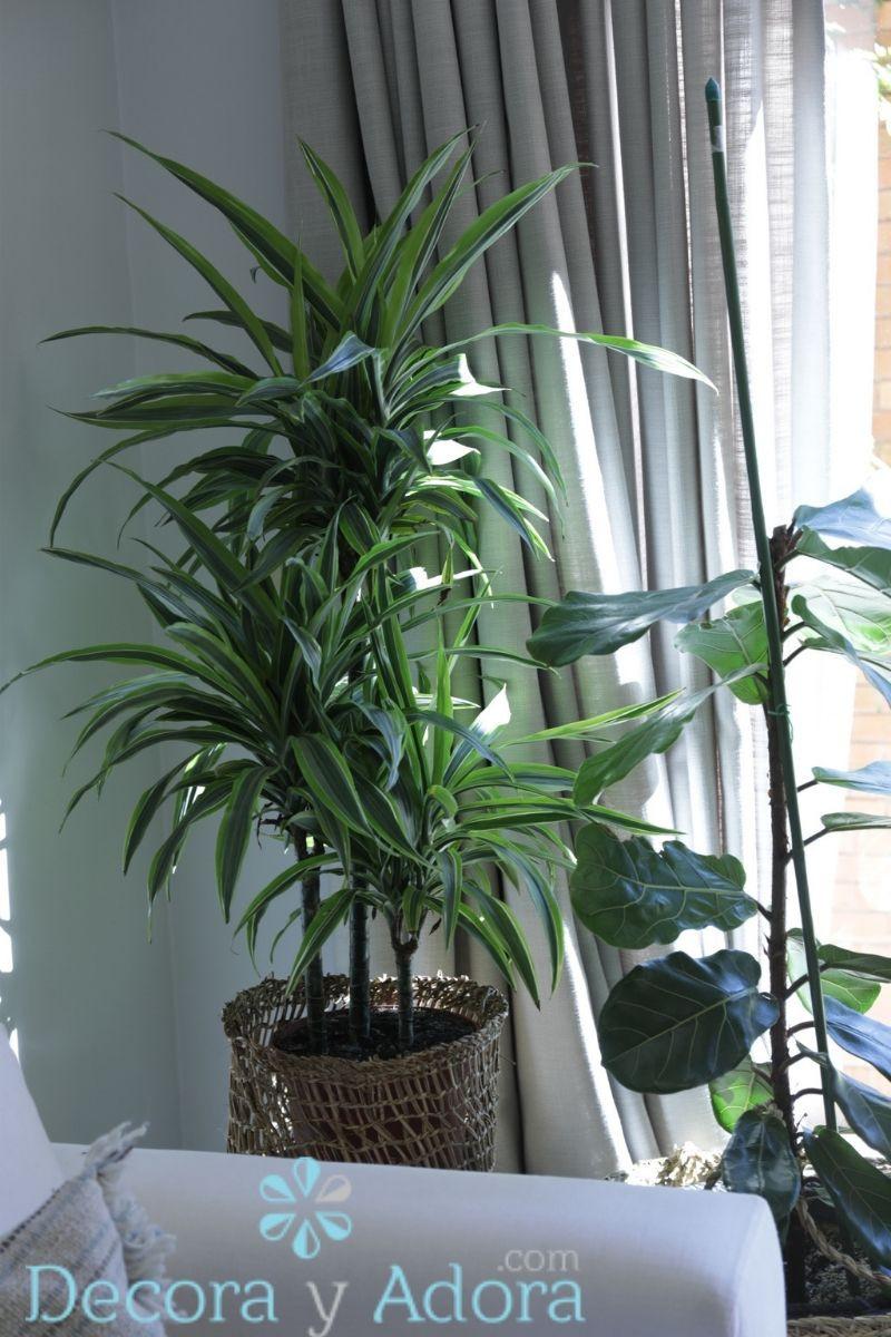 plantas en sala de estar