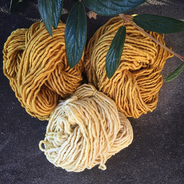 yarns dyed with marigolds