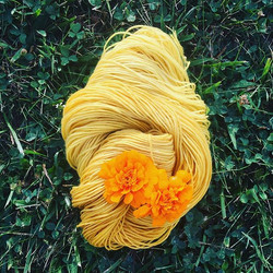 marigold yarn out to dry
