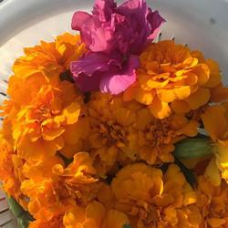 orange and pink botanicals