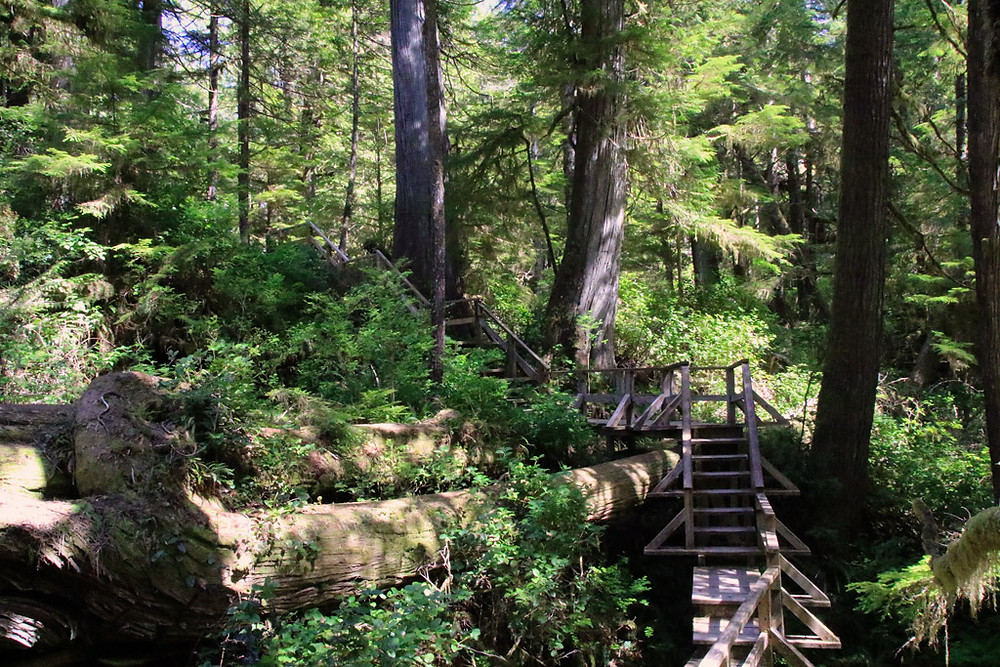 Best things to do in Tofino and Ucluelet - Rainforest trail