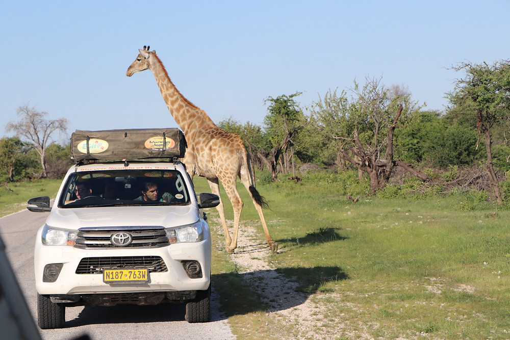 Etosha National Park is part of your Nambia 14 days itinerary
