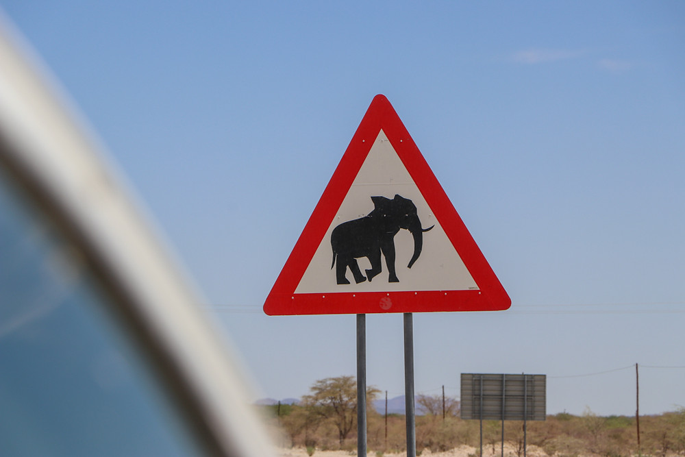 Spot desert elephants on your road trip across Namibia