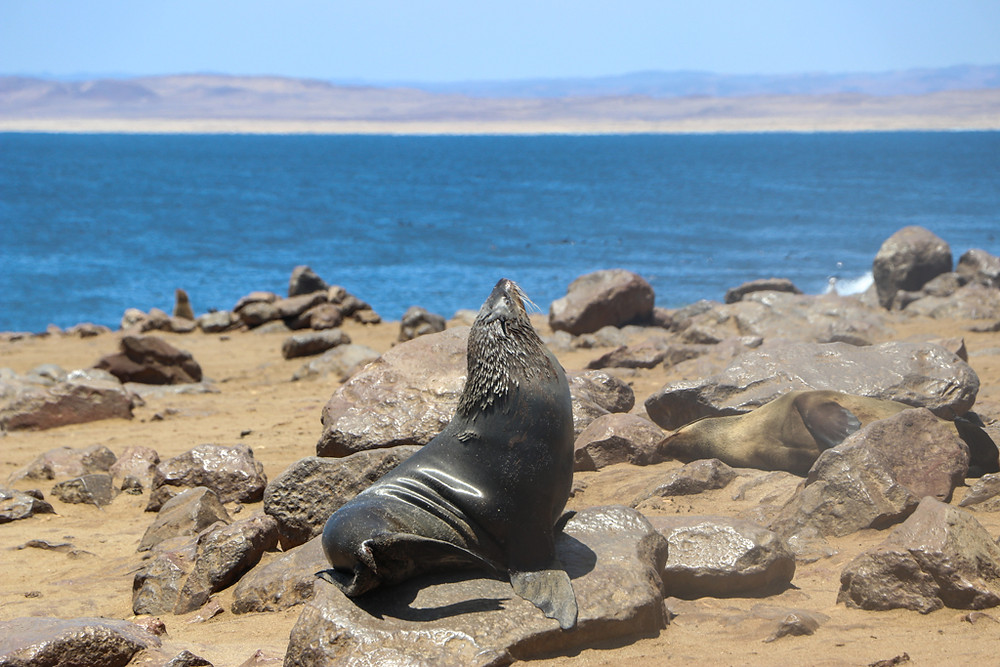 Cape Cross Seal Colony in Namibia is a must-do