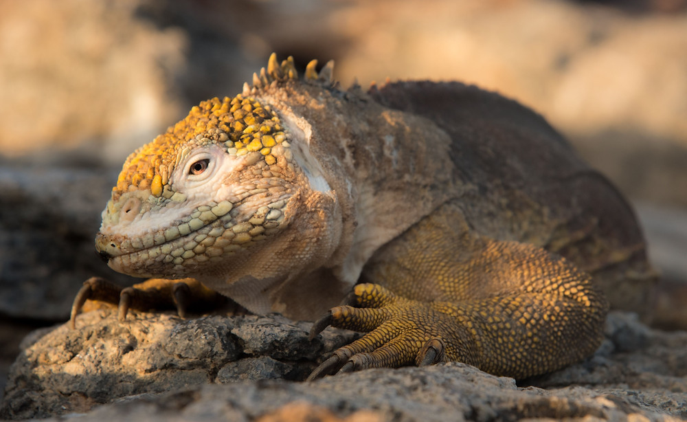 Working abroad learnings in Galapagos