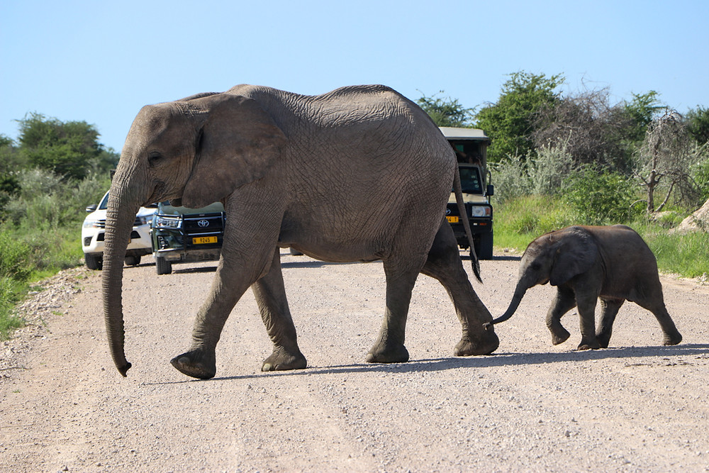 Etosha National Park is a must-see destination in Nambia