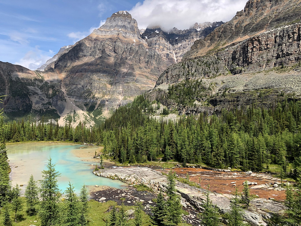 Colorful alpine meadows on the Opabin Plateau in Lake O'Hara