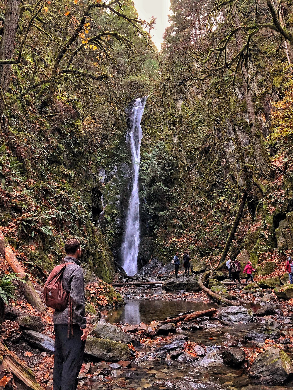 Hiking in Goldstream Provincial Park is one of the best things to do in Victoria, BC