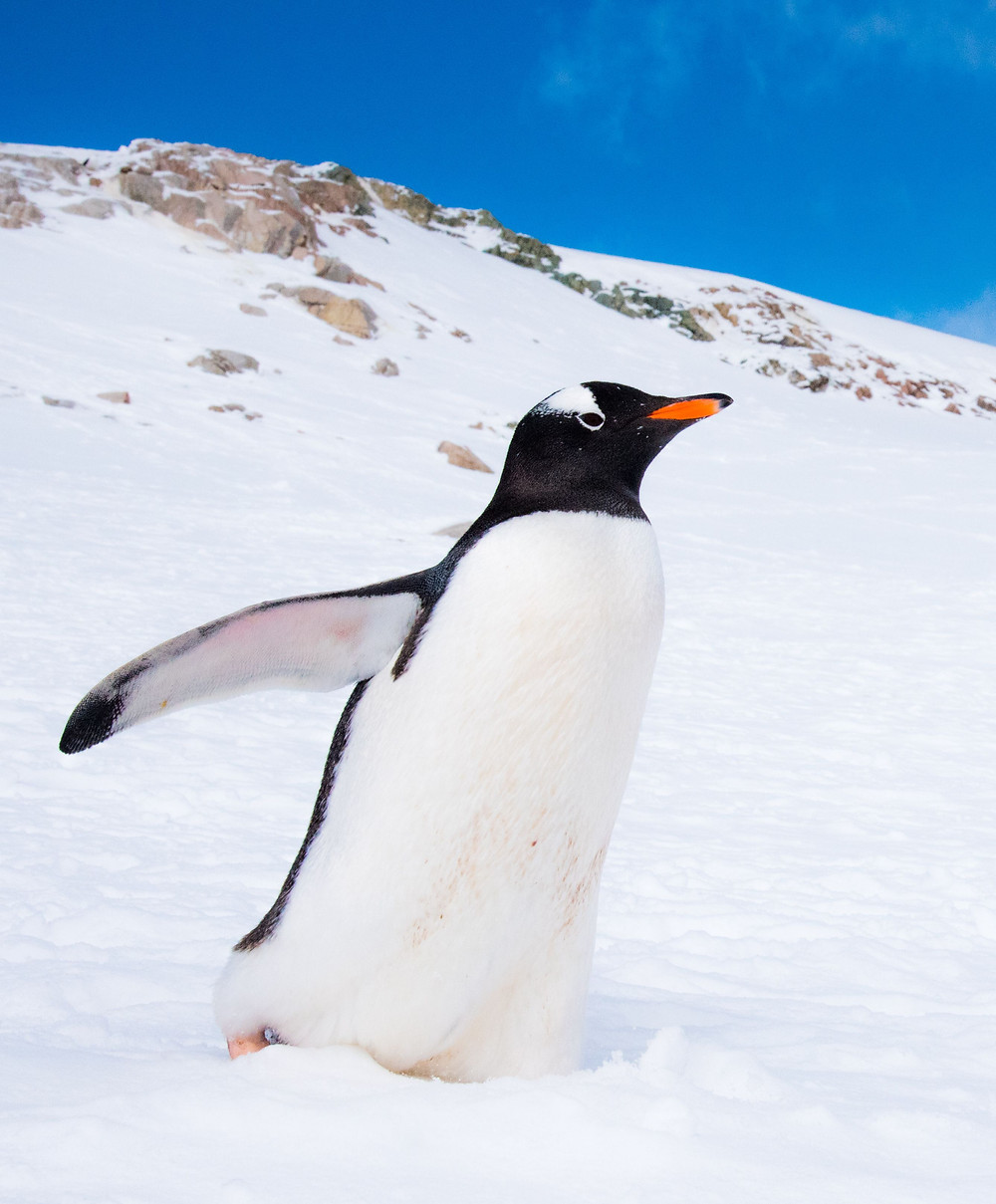 Working abroad learnings from Antarctica