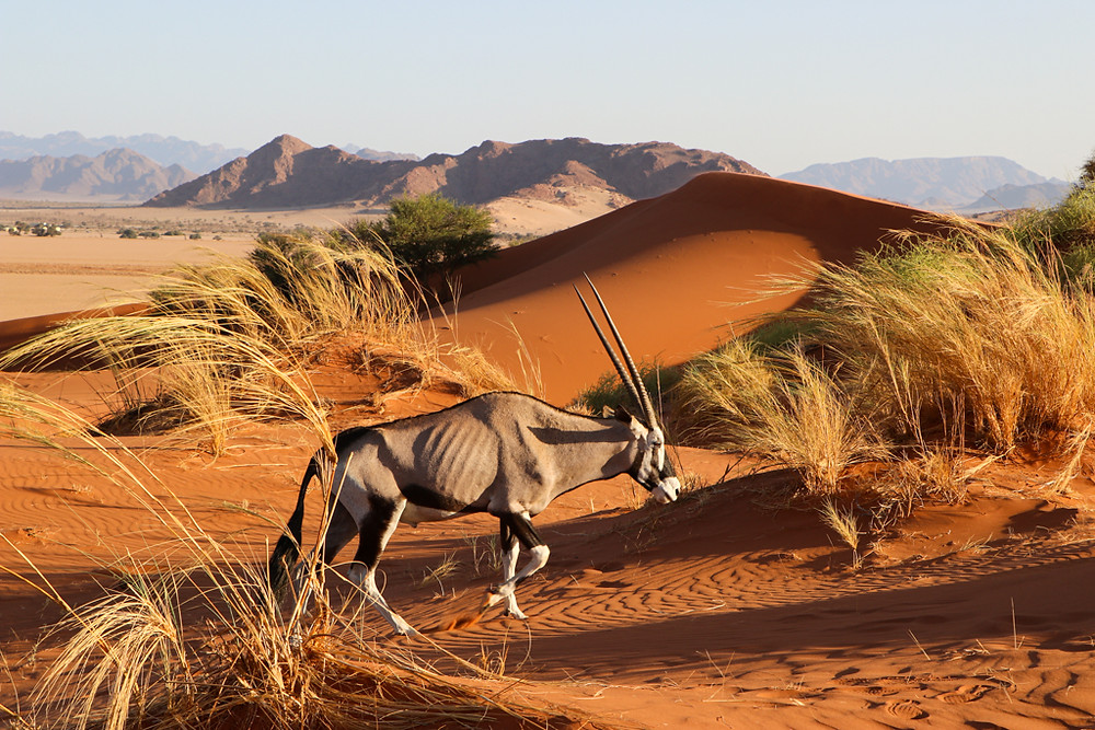 A top adventure thing to do in Namibia