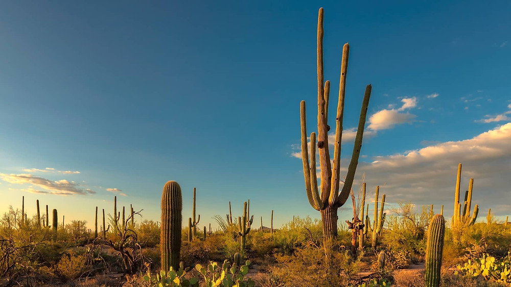 Best US National Park in desert
