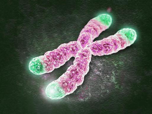 Telomeres: Key to Immortality?