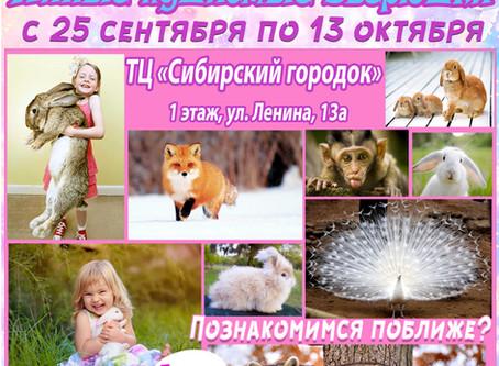 Выставка самых милых пушистиков «ЭкZоферма» в г. Анжеро-Судженск!