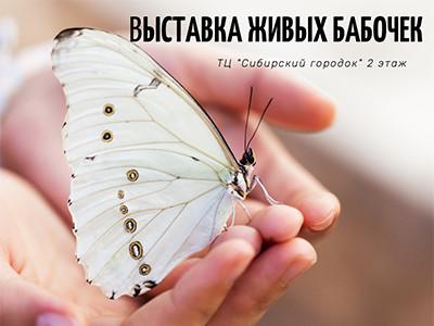 """Выставка живых бабочек в Белово! ТЦ """"Сибирский городок"""". 2 этаж"""