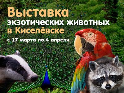 Выставка экзотических животных в Киселевске