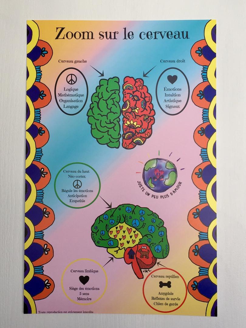 Affiche zoom sur le cerveau
