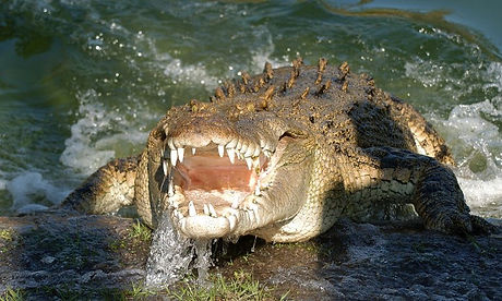gatorland_airboat_safari_default_image.j