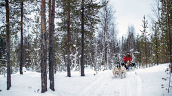 husky sledding at santas grotto.jpg