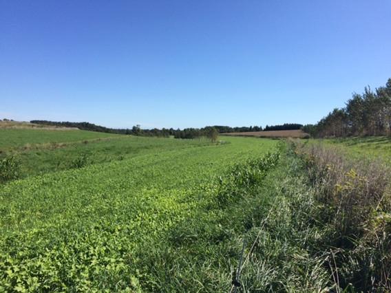 cover crops M Dolan's farm.JPG