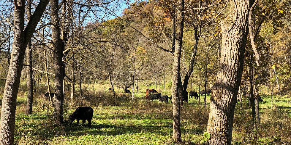 Opportunities with Silvopasture: More Than Just Animals in The Woods