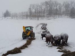 winter-feeding-in-fields-1.jpg
