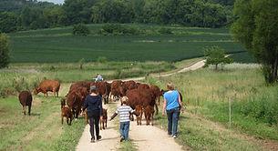 family moves cattle.JPG