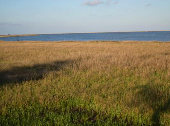 ShorelandWetlandGulfBeyond.JPG