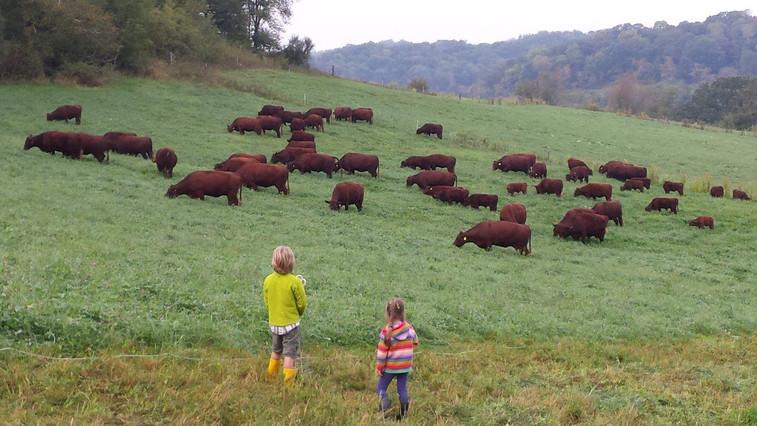 Hillside Pastures PHOTO 20150924_083441.
