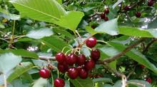Früchte-Alarm