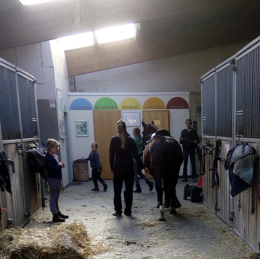 Aktivität im Stall