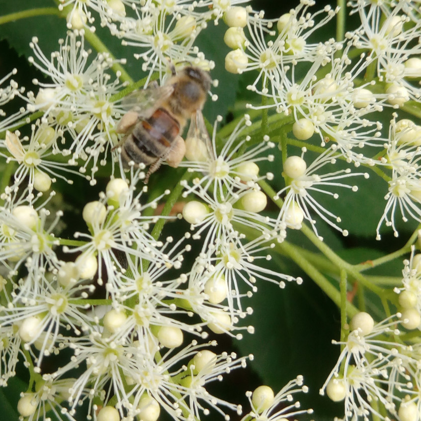 Wildbienen