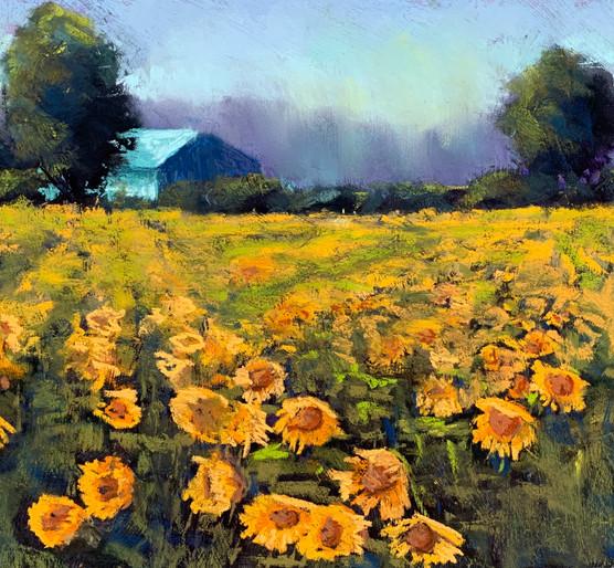 Sunflowers at Beach Plum Farm (Cape May NJ)
