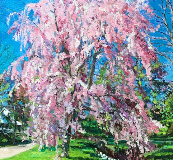 Pink Weeping Willow Tree