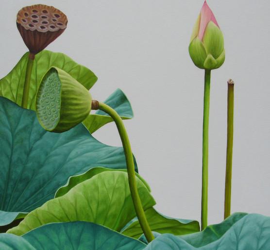 Lotus 45