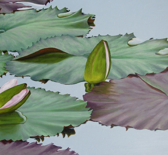 Water Lilly 48