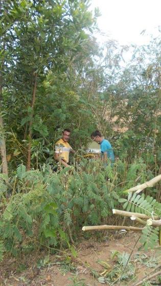 plantation 2010 (1).jpg