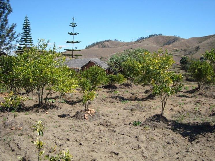 plantation (1).jpg