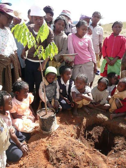 Replantage des arbres par les enfants.JP