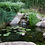 Thumbnail: DIY Backyard Pond Kits