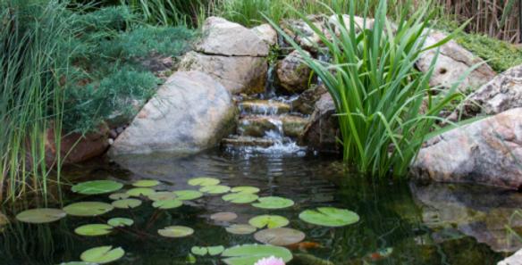 DIY Backyard Pond Kits