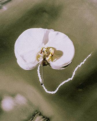 Phalaenopsis Lapel Pin