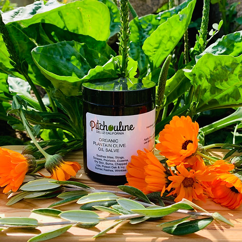 Organic Plantain/Calendula Olive Oil Salve