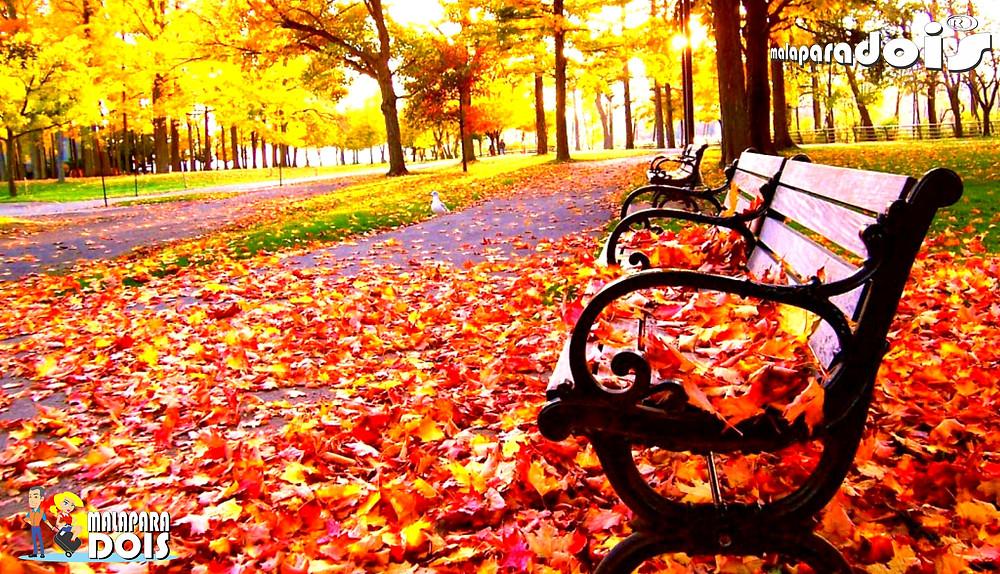 Outono 2.jpg