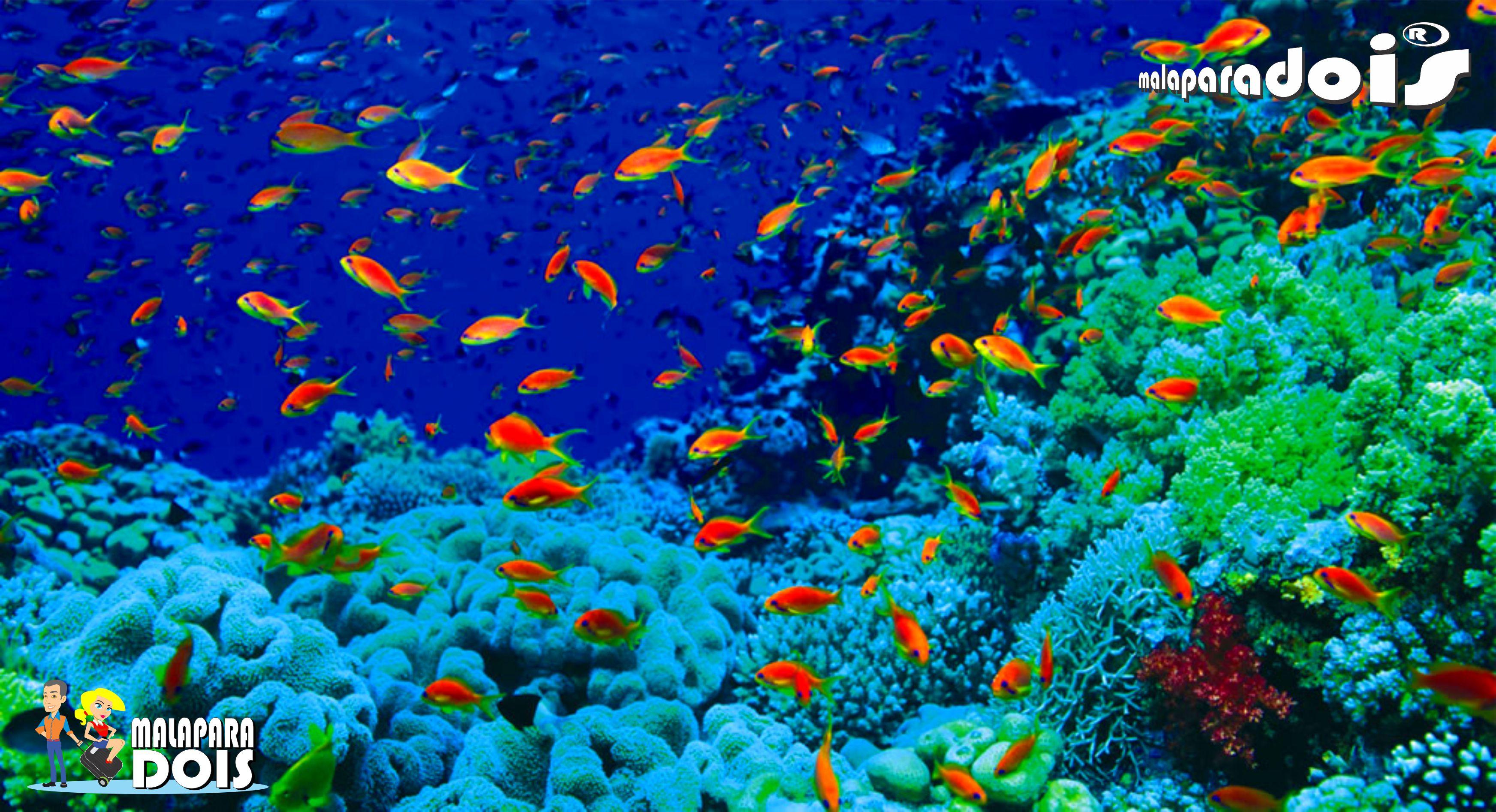 Egito   Mar Vermelho