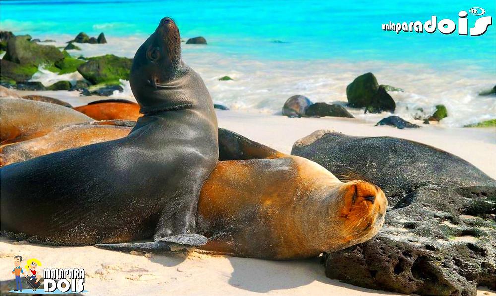 Focas de Galápagos