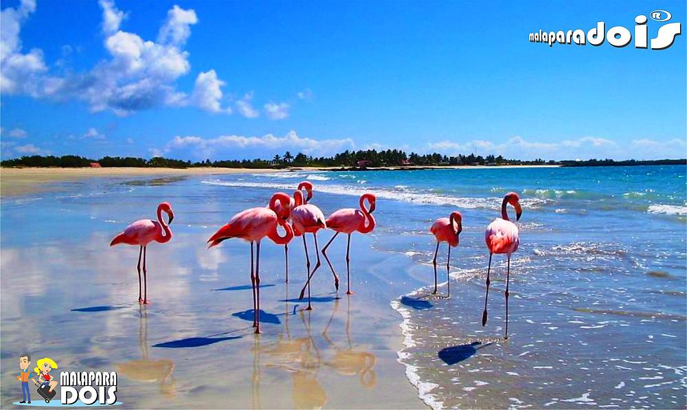 Flamingos em Puerto Villamil